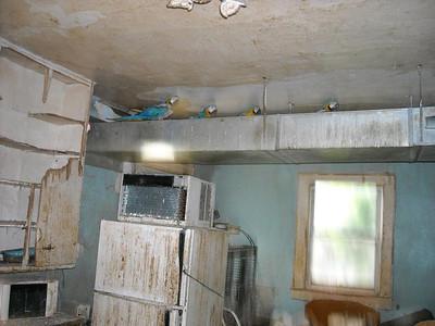 Troy Ohio Parrot Horror