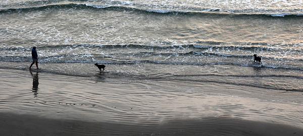 Dog Walker Padre Island
