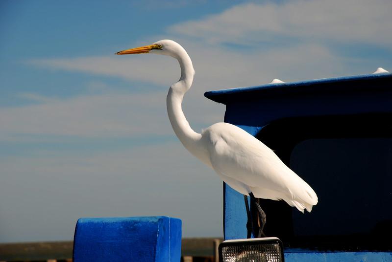 Great Egret on Shrimp Boat