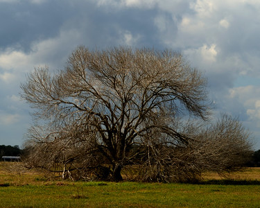 Bar X Tree
