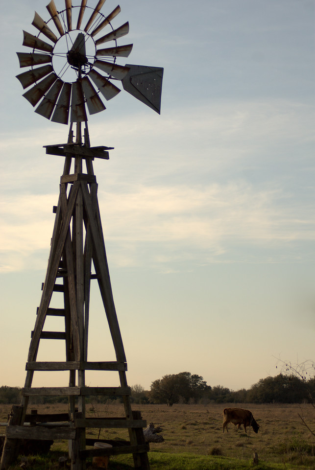 Windmill with Cow