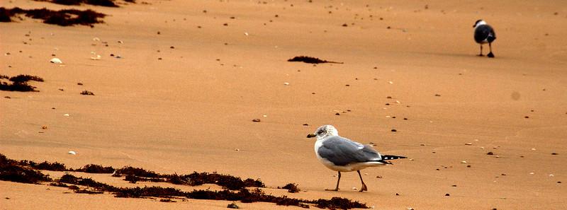 Gulls on a Winter's Beach