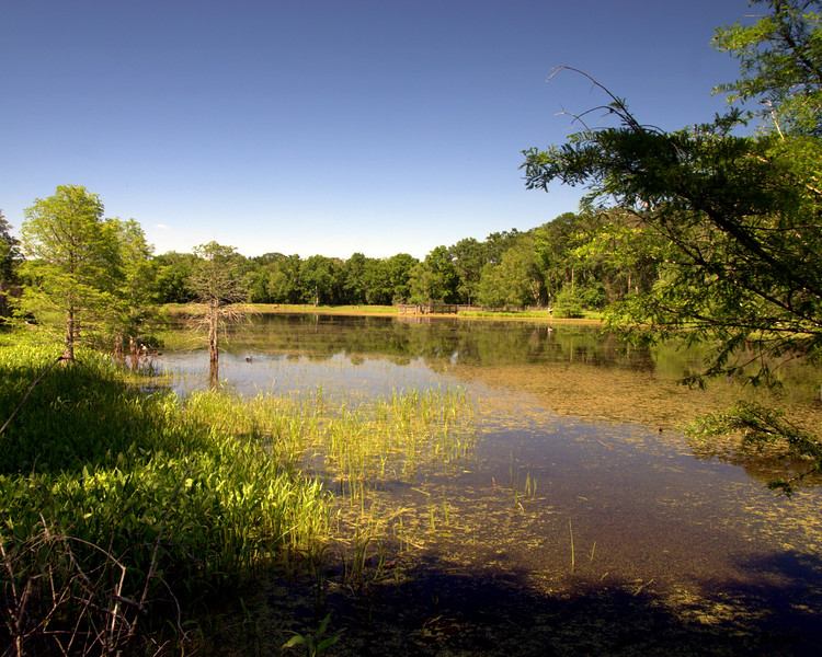 Creekfield Lake<br /> Creekfield Interpretive Trail<br /> Brazos Bend State Park