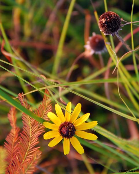 Natures Still Life