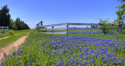 Bluebonnet Gate