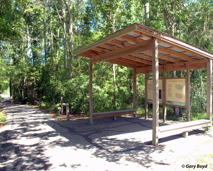 Creekfield Interpretive Trail<br /> Brazos Bend State Park