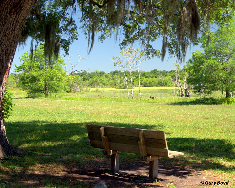 Shady Bench<br /> Elm Lake<br /> Brazos Bend State Park
