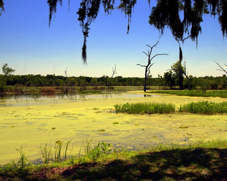 Elm Lake<br /> Brazos Bend State Park