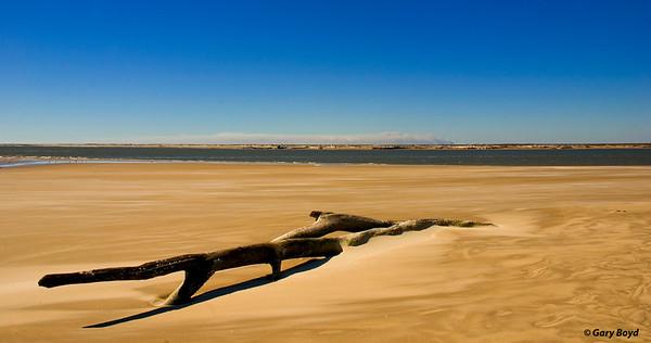Bryan Beach Driftwood