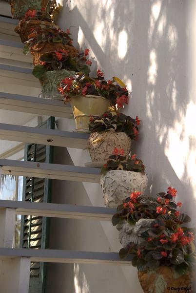 Stairway Plants