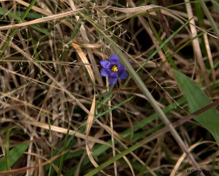 The Nash Prairie Preserve, March 7, 2012 Nash Prairie Preserve Brazoria County, TX