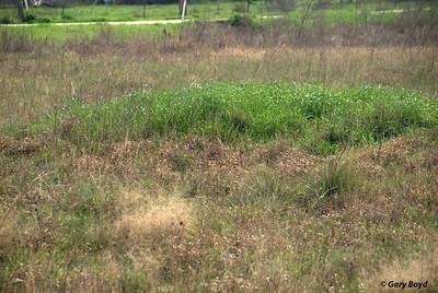 The Nash Prairie Preserve, February 6, 2012 Nash Prairie Preserve Brazoria County, TX