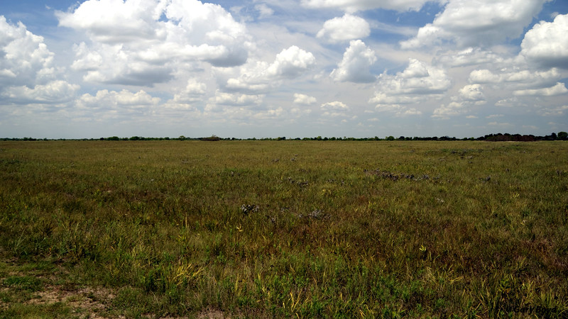 The Nash Prairie Preserve,<br /> August 15, 2011 Nash Prairie Preserve<br /> Brazoria County, TX