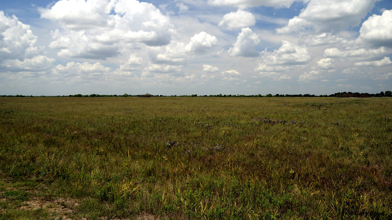 The Nash Prairie Preserve,