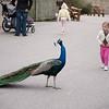 2012 05 25 Zoo-24