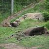 2012 05 25 Zoo-12