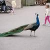 2012 05 25 Zoo-23