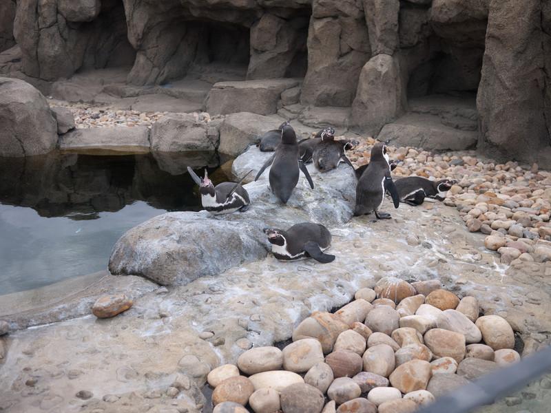 2012 05 25 Zoo-4
