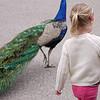 2012 05 25 Zoo-22