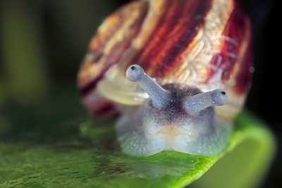 Little snail, made with magnification 2 and f/16 (Canon 40D).