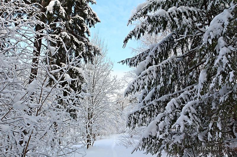 Гатчинские снега / Path in snowy winter forest