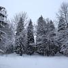 Парк Сильвия - Гатчина
