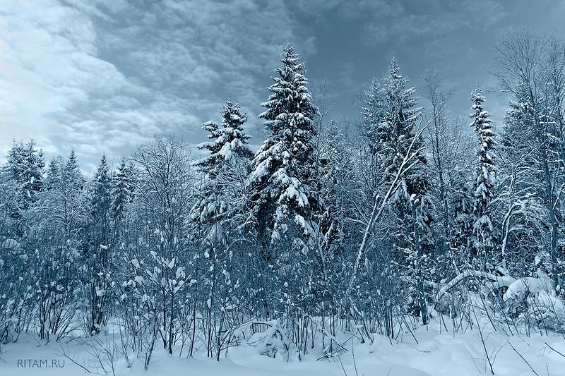 Гатчинские снега / Snowy forest