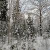 Гатчинские снега