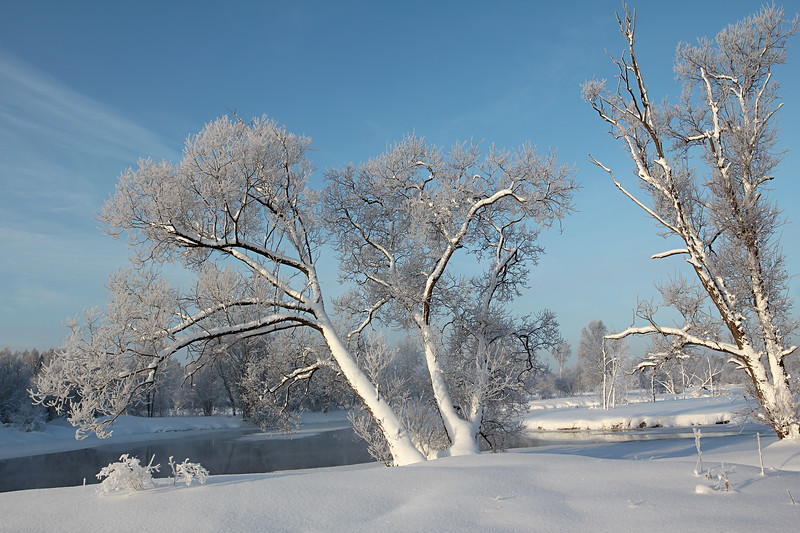 Snowy willows over a frozen river