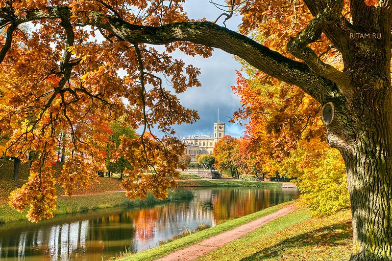 Gatchina Park - Autumn / Гатчинский парк - осень