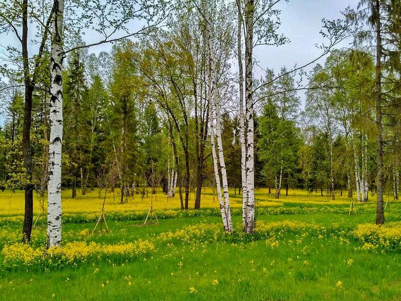 Гатчинский парк - весна