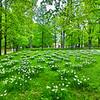 Весенний Гатчинский парк
