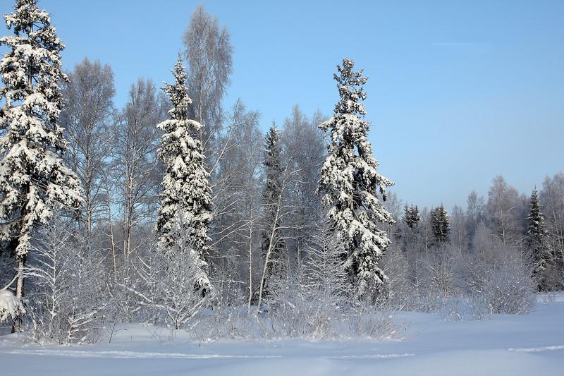 Gatchina Park - Guardians of Winter / Гатчинский парк - Стражи Зимы