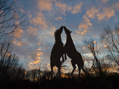 CA~Sunset-Horseplay~242