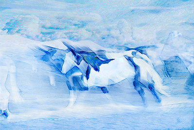 Blue Stampede II 1264-