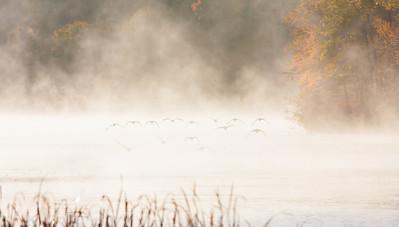 NA~Autumn-Geese-2~242