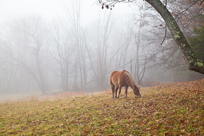 PA~Ranger-in-the-Fog~242