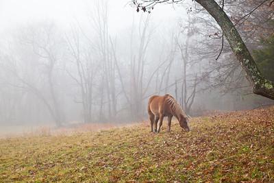 PA~Ranger-in-the-Fog~242