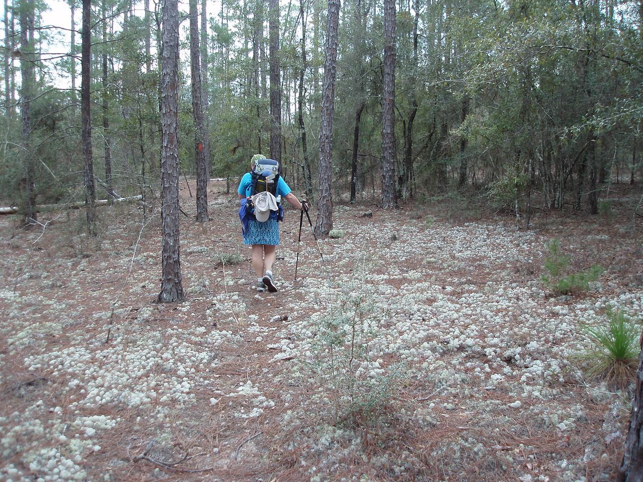 Hiking the Florida Trail, Eglin AFB<br /> PHOTO CREDIT: Robert Coveney / Florida Trail Association