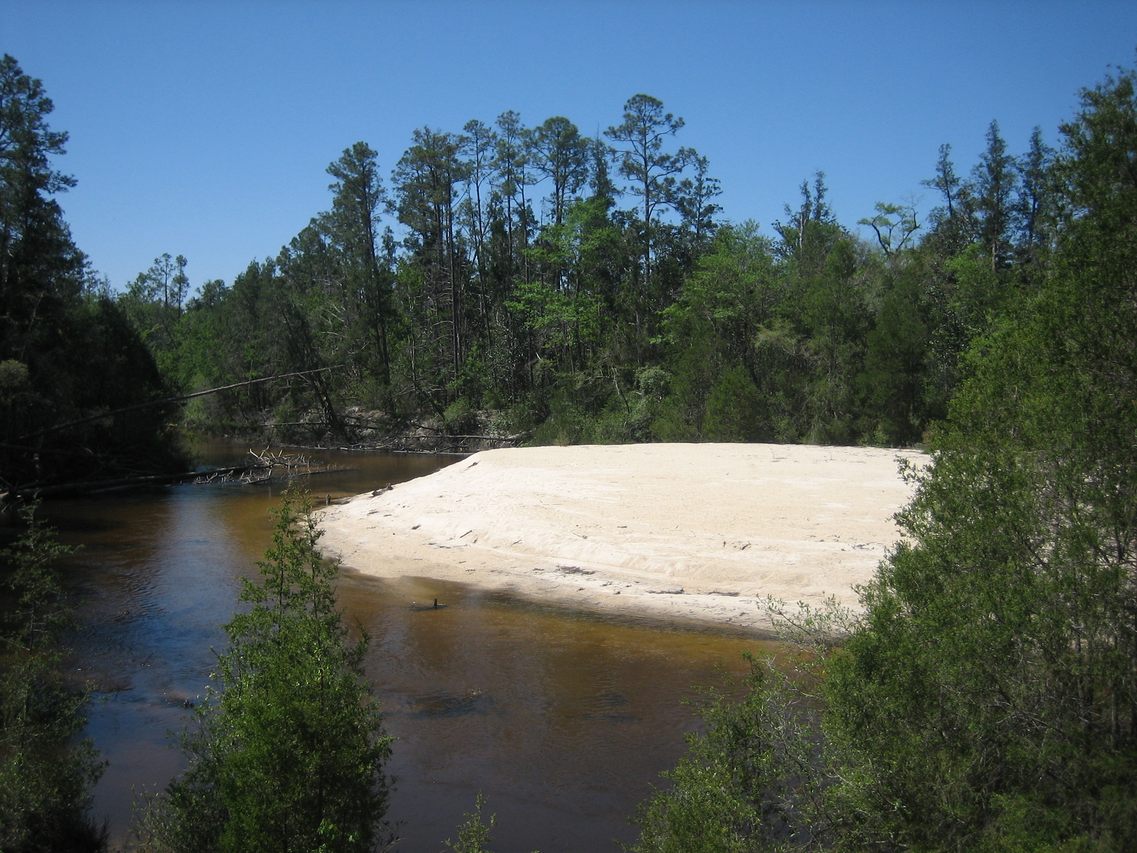 The Blackwater River from the Juniper Creek Trail<br /> PHOTO CREDIT: Sandra Friend / Florida Trail Association