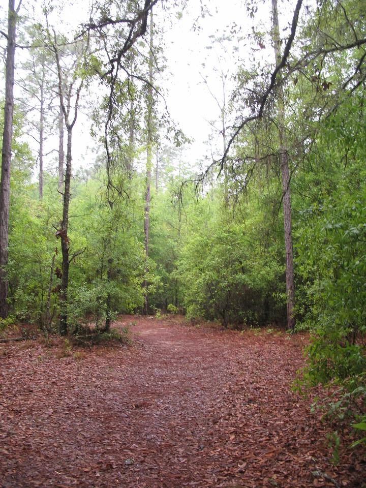 Whispering Pines Park (Deb Blick)