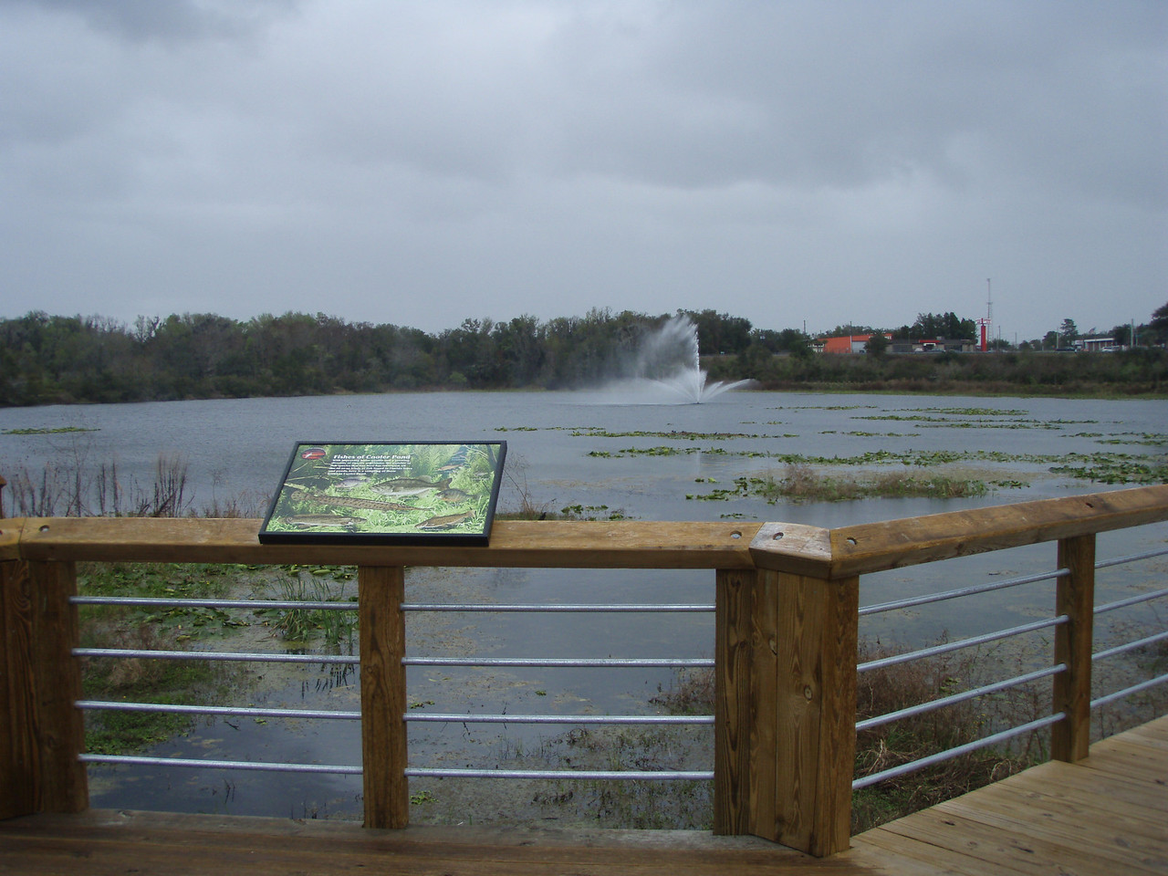 Cooter Pond Park (Deb Blick)
