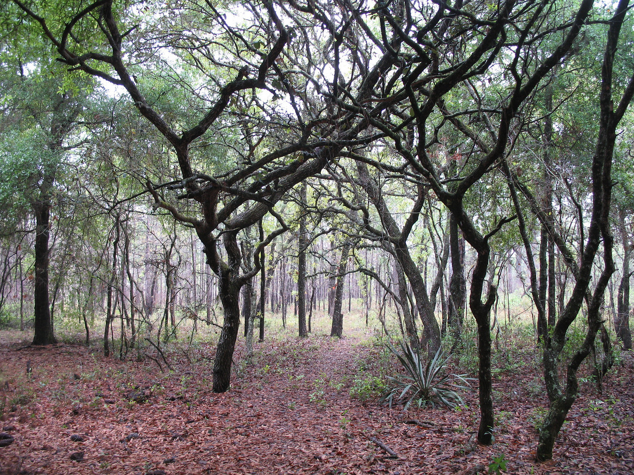 Hiking the FT through the Citrus Tract (Sandra Friend)