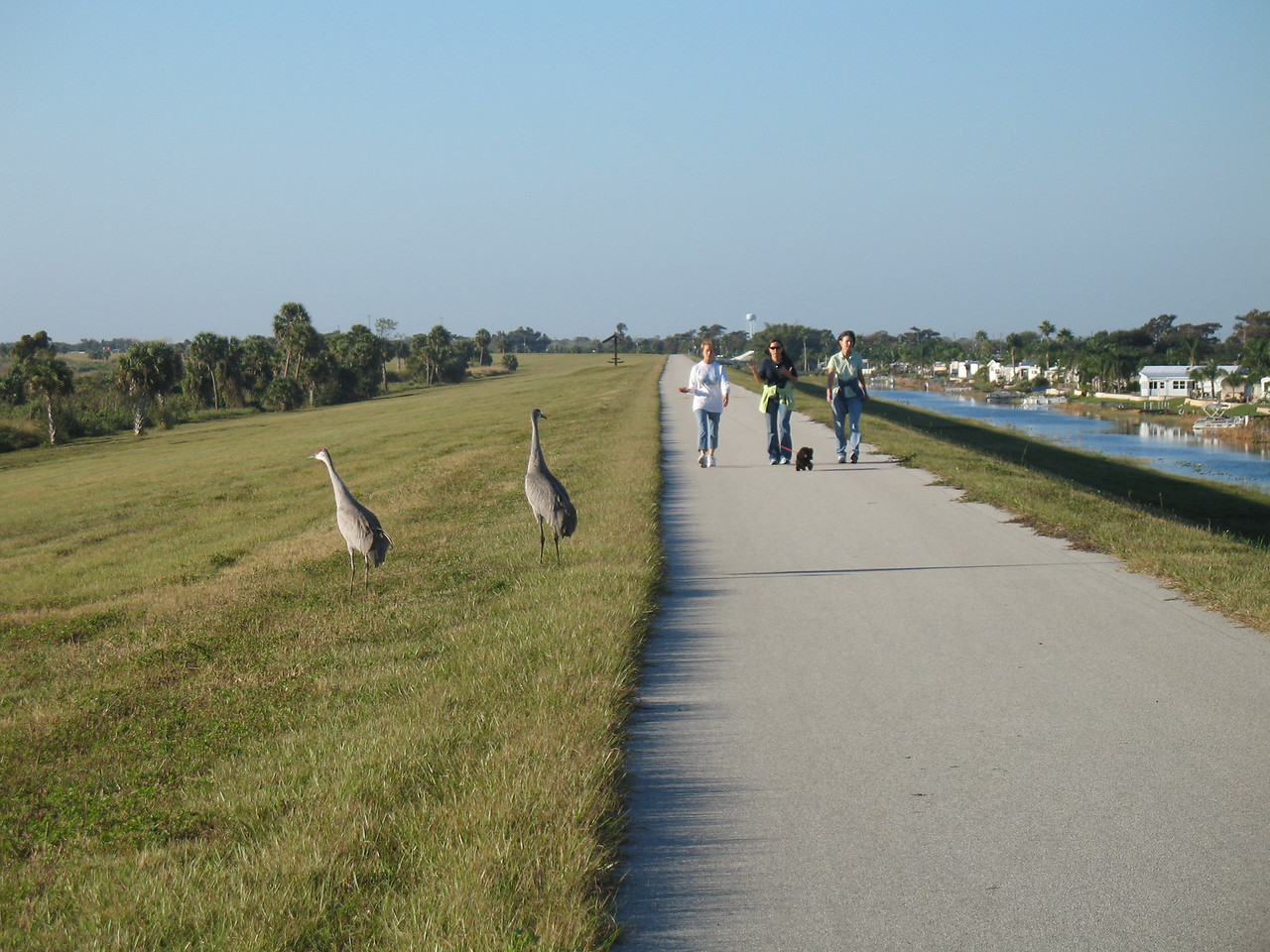 Strolling the dike with sandhill cranes nearby (Sandra Friend)