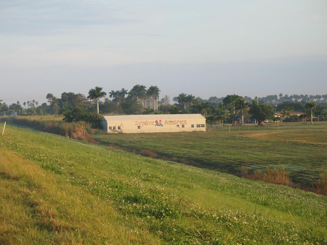 Royal palms at the south edge of Pahokee, near the airport (Sandra Friend)