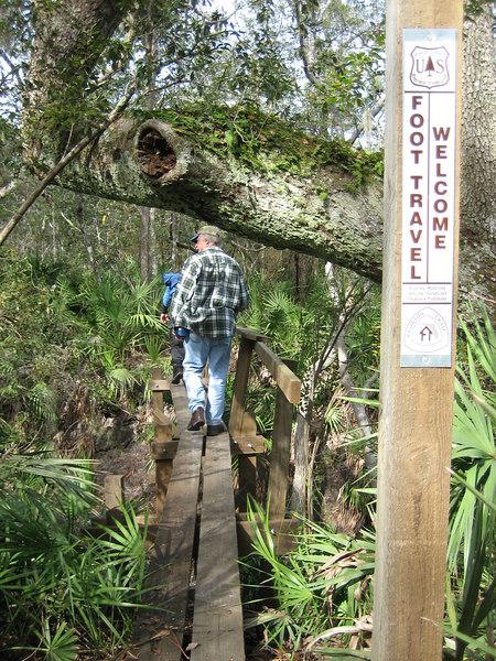 Bridge across a ravine on the Florida Trail<br /> PHOTO CREDIT: Sandra Friend / Florida Trail Association