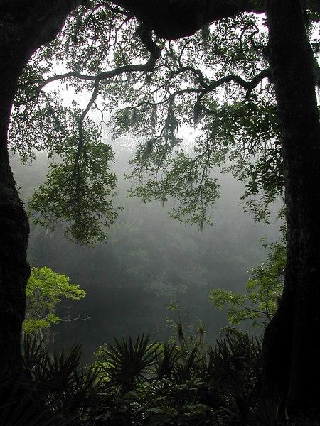 Morning fog on the Suwannee<br /> PHOTO CREDIT: Sandra Friend / Florida Trail Association