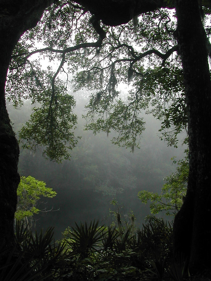 Morning fog on the Suwannee<br /> PHOTO CREDIT: Sandra Friend / Florida Trail Association
