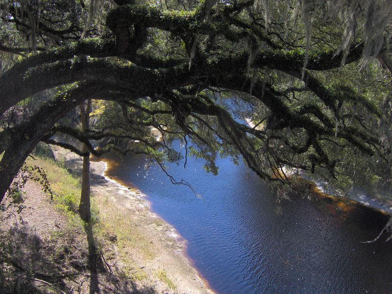Looking down on the Suwannee River<br /> PHOTO CREDIT: Bruce Lyon / Florida Trail Association