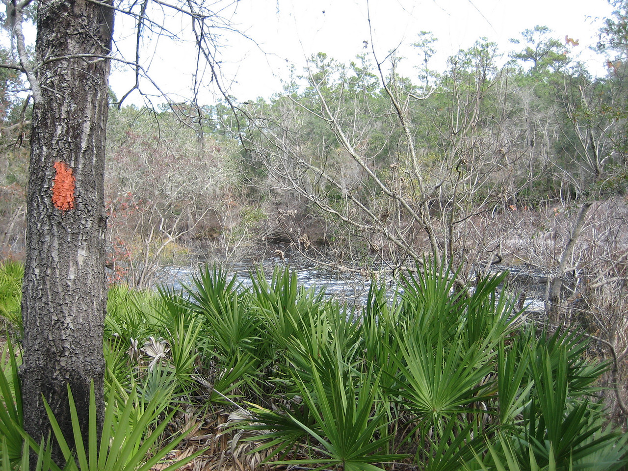 Florida Trail overlooks Little Shoals<br /> PHOTO CREDIT: Sandra Friend / Florida Trail Association
